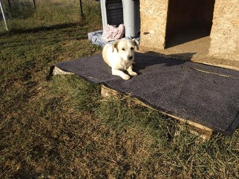 Spende Tierheim weißer Hund